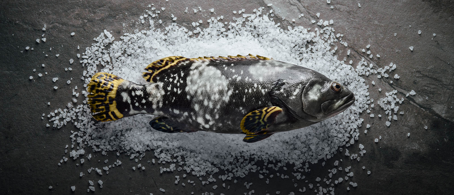 our-grouper-image-2